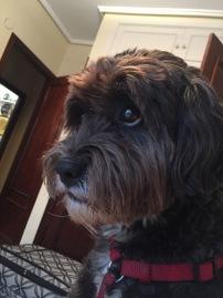 Kiñu, mi perro