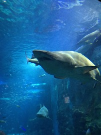 Bruce, the shark