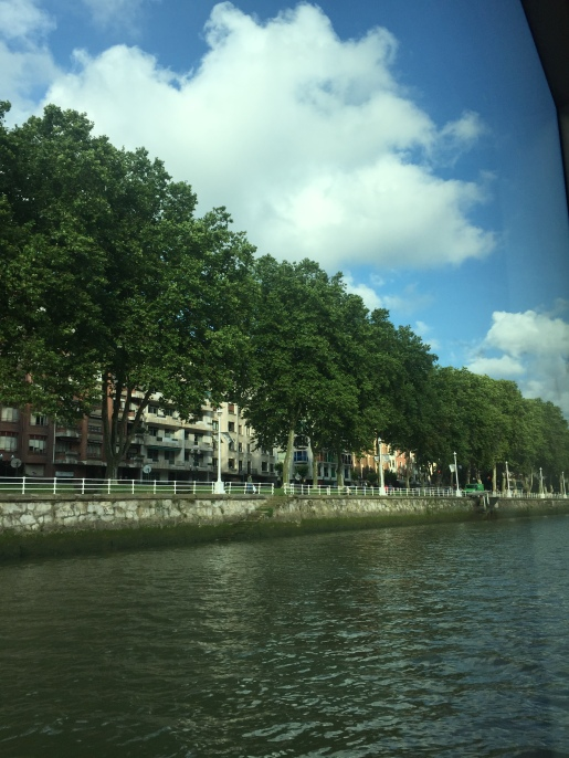 Trees lining the river