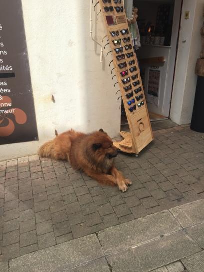 Doggie crossing his legs